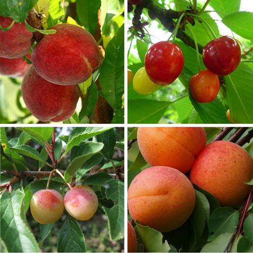 Le choix des arbres fruitiers pour votre jardin jardin fruitier - Maladie des arbres fruitiers ...