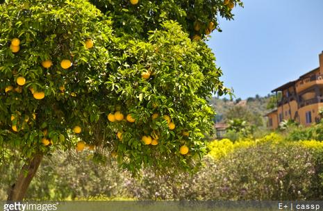 Jardin fruitier conseils jardinage fruits du jardin - Comment avoir un beau jardin ...