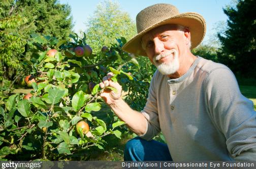 Fiche conseil : comment planter un arbre fruitier ?