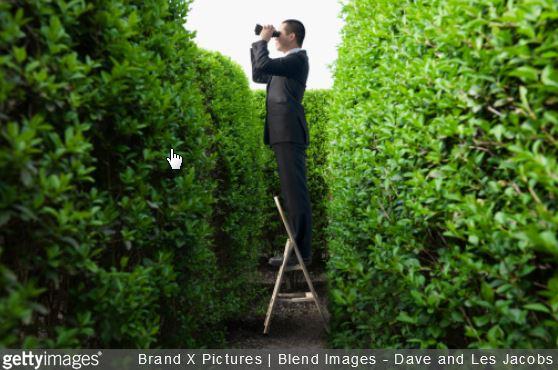 haie-jardin-comment-eviter-vis-a-vis-bambou-photinia-choisir-jardinage-maison